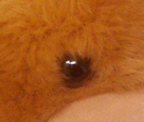 The details are still acceptable for a camera of its caliber, showing an average amount of distinction between the fur.