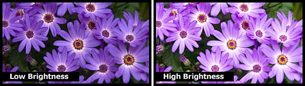 Brightness goes hand-in-hand with contrast to affect perceived image detail.