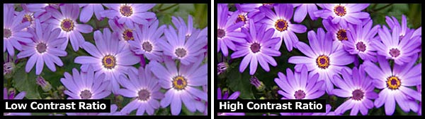 A higher contrast ratio typically means better color representation.